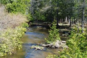 Brookie water
